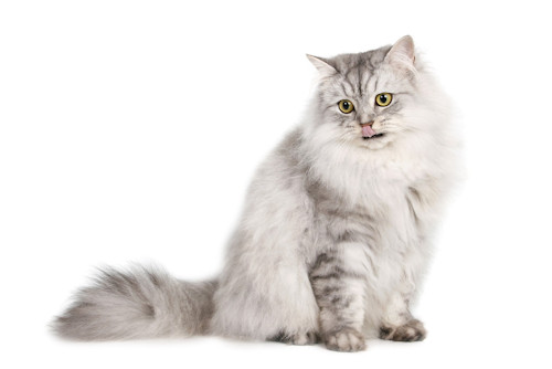 Szczepienia ochronne dla kotów