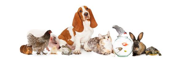 Dodatkowe usługi dla zwierząt